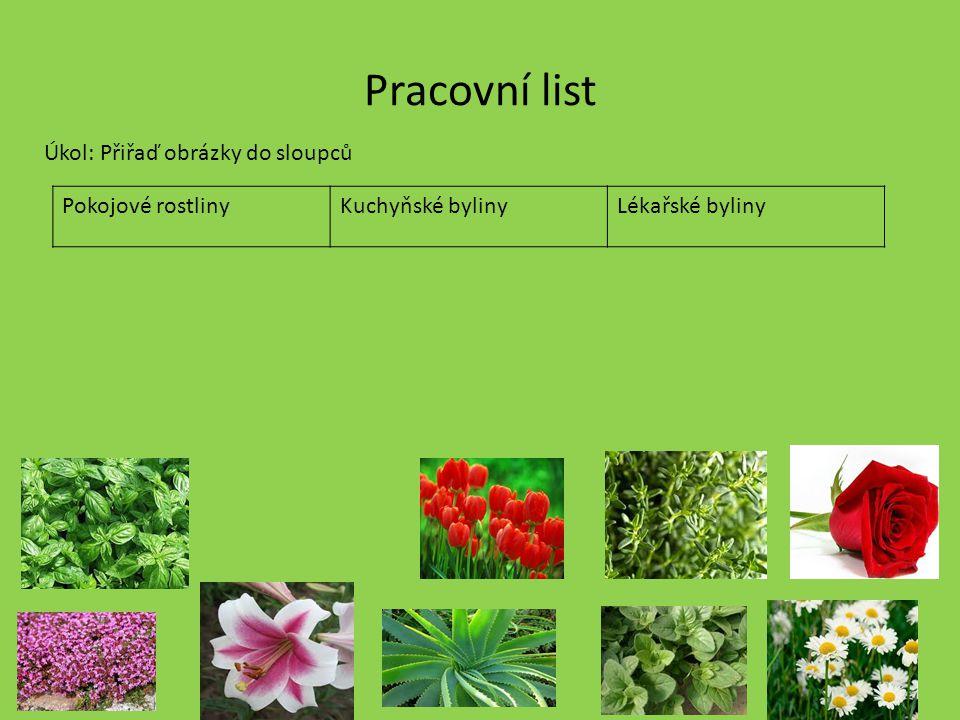 Pracovní list Úkol: Přiřaď obrázky do sloupců Pokojové rostliny
