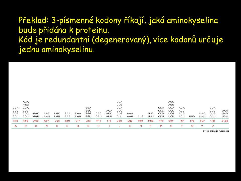 Překlad: 3-písmenné kodony říkají, jaká aminokyselina bude přidána k proteinu.