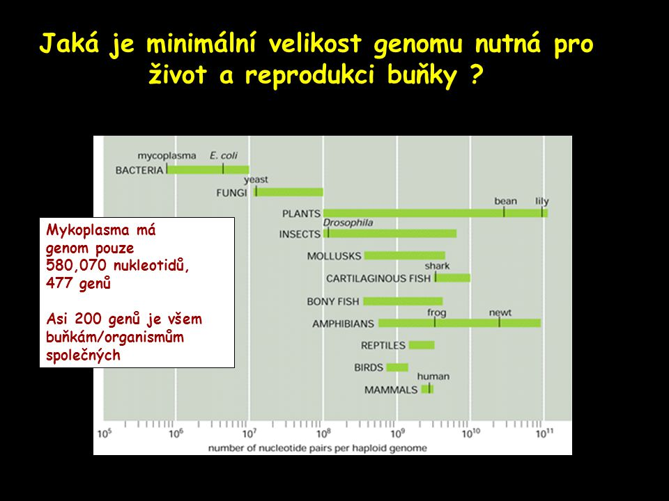 Jaká je minimální velikost genomu nutná pro život a reprodukci buňky