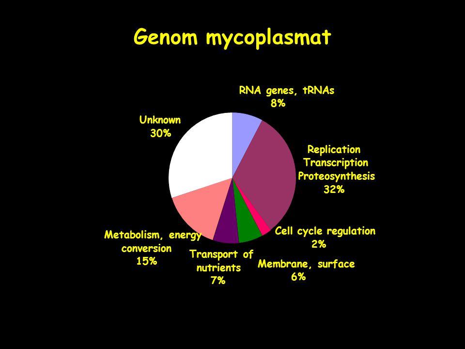 Genom mycoplasmat RNA genes, tRNAs 8% Unknown 30% Replication,