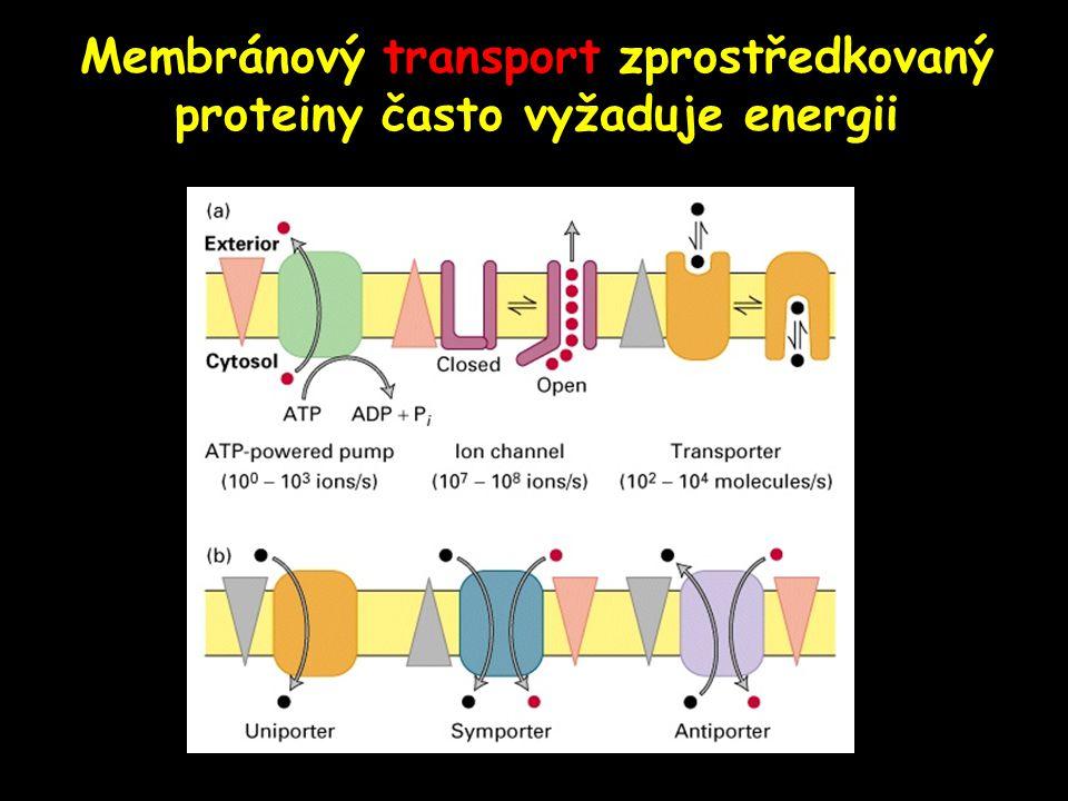 Membránový transport zprostředkovaný proteiny často vyžaduje energii