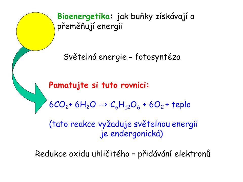 Světelná energie - fotosyntéza