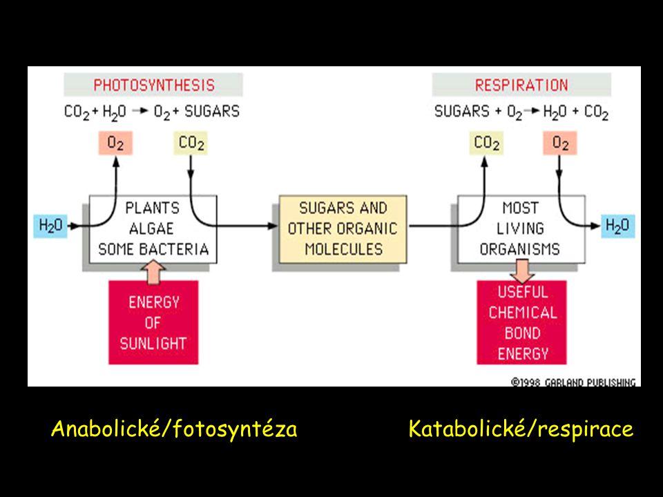 Anabolické/fotosyntéza Katabolické/respirace