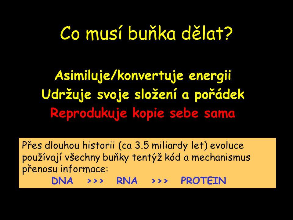 Co musí buňka dělat Asimiluje/konvertuje energii