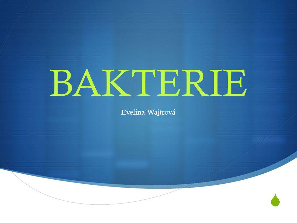 BAKTERIE Evelina Wajtrová