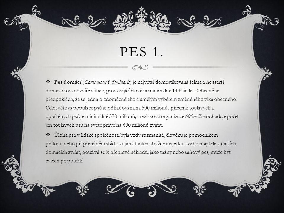 Pes 1.
