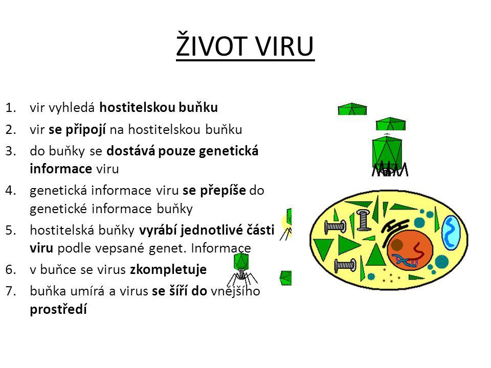 ŽIVOT VIRU vir vyhledá hostitelskou buňku
