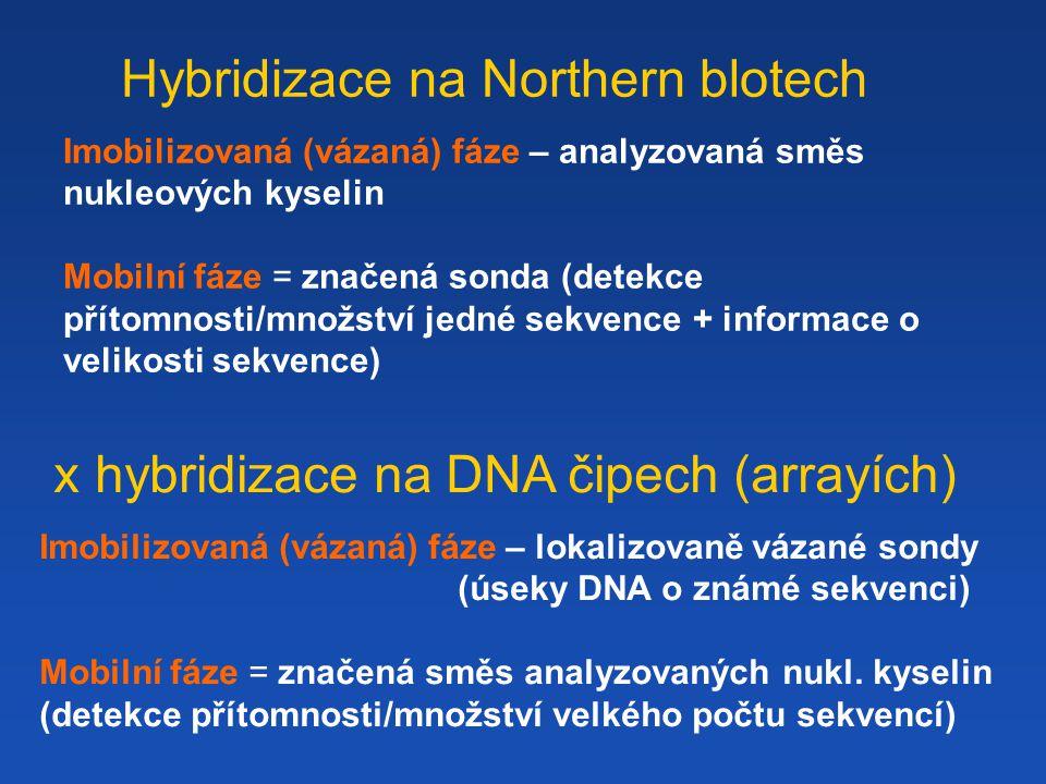 Hybridizace na Northern blotech