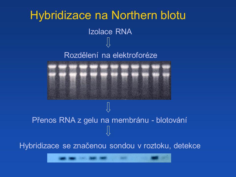 Hybridizace na Northern blotu