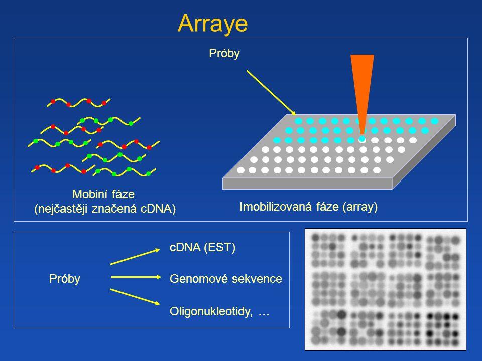Arraye Próby Mobiní fáze (nejčastěji značená cDNA)