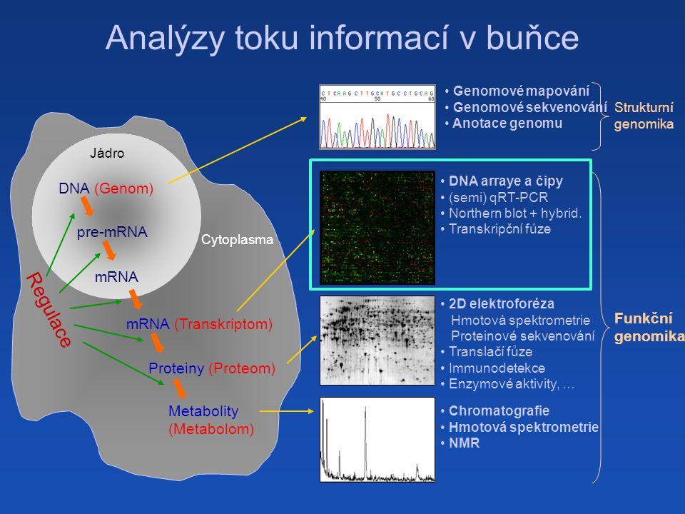 Analýzy toku informací v buňce