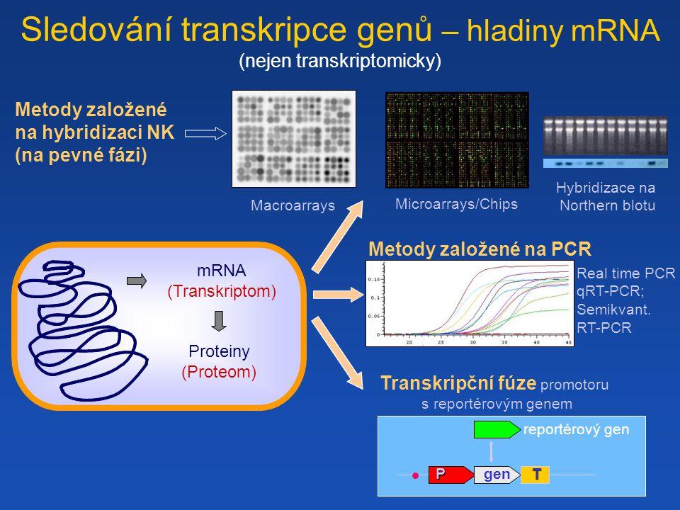 Sledování transkripce genů – hladiny mRNA