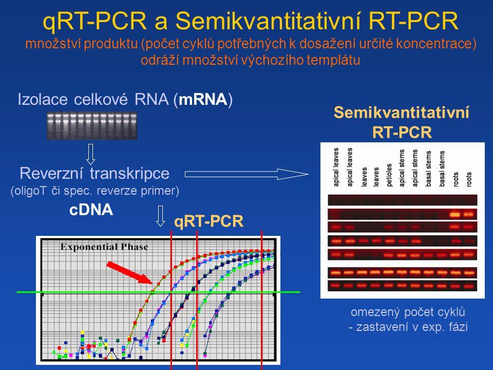 Semikvantitativní RT-PCR