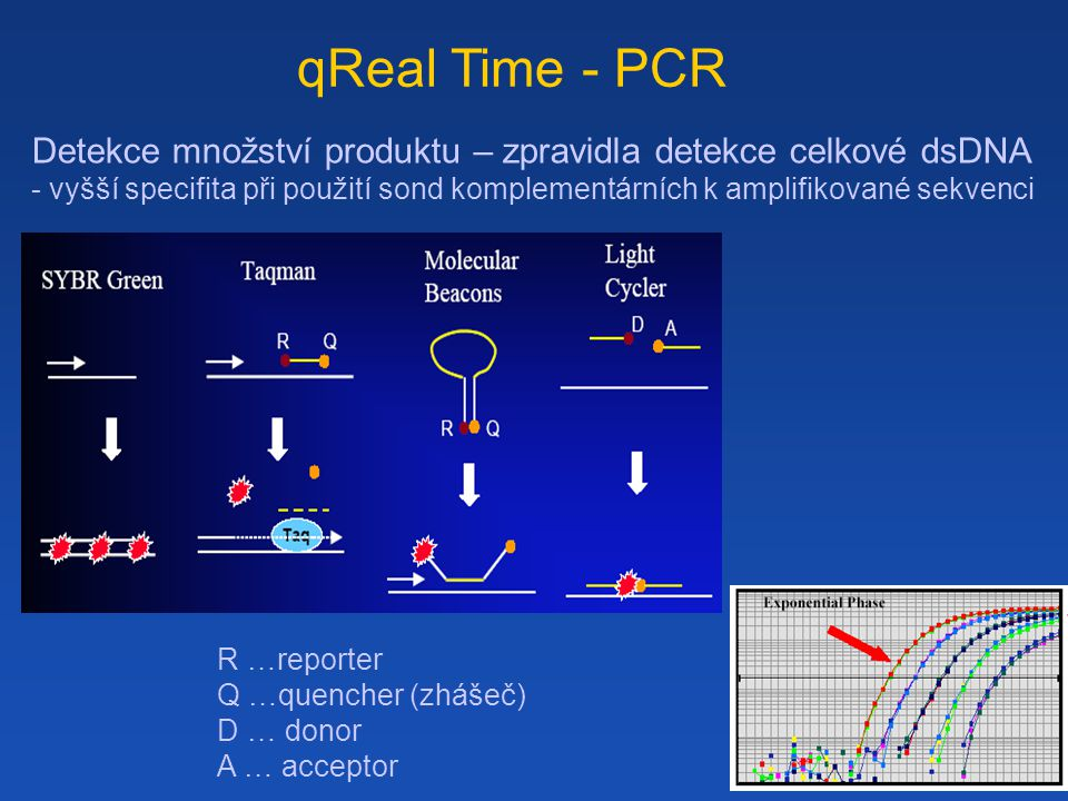 qReal Time - PCR Detekce množství produktu – zpravidla detekce celkové dsDNA.