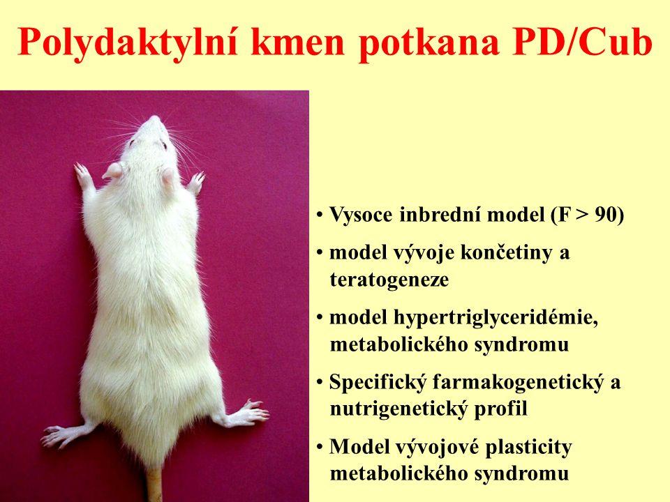 Polydaktylní kmen potkana PD/Cub