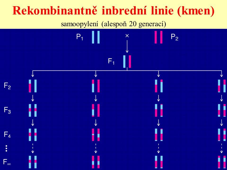 Rekombinantně inbrední linie (kmen)