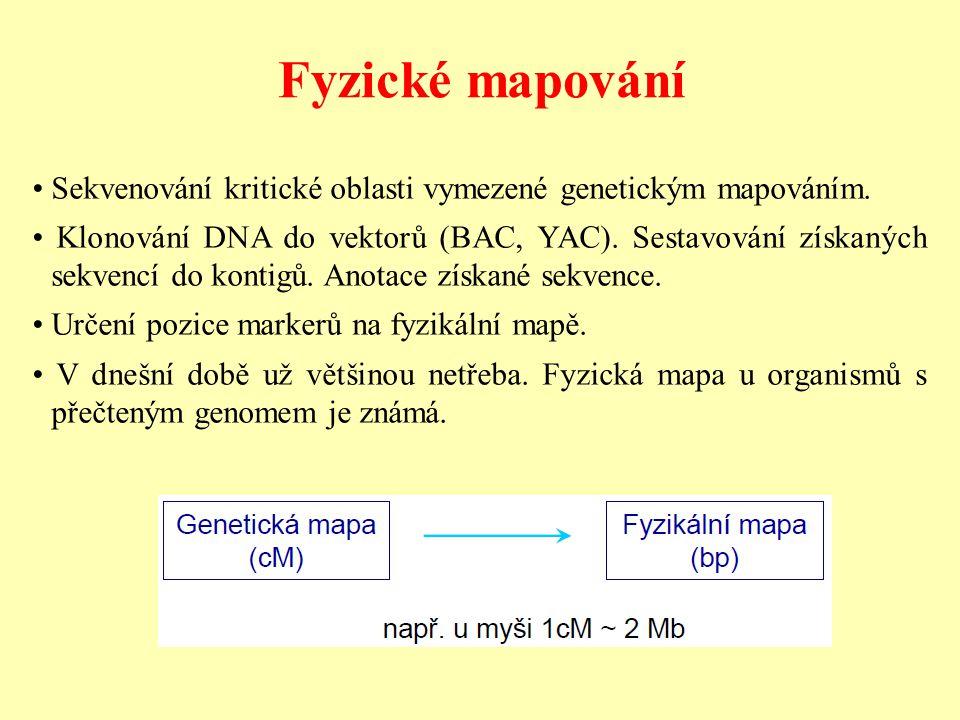 Fyzické mapování • Sekvenování kritické oblasti vymezené genetickým mapováním.