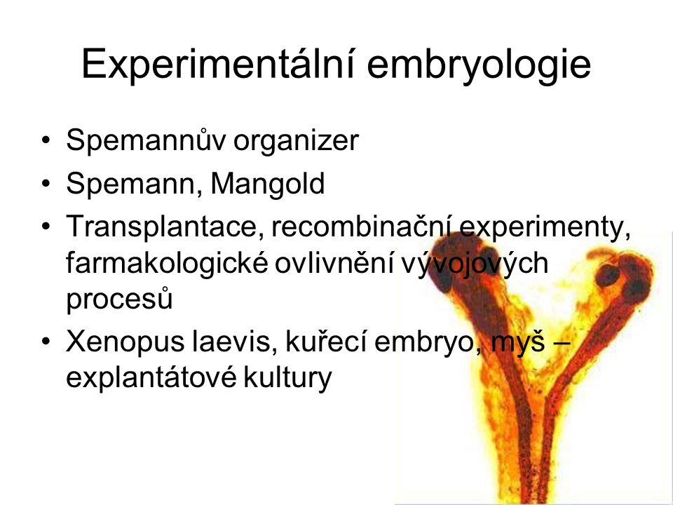 Experimentální embryologie
