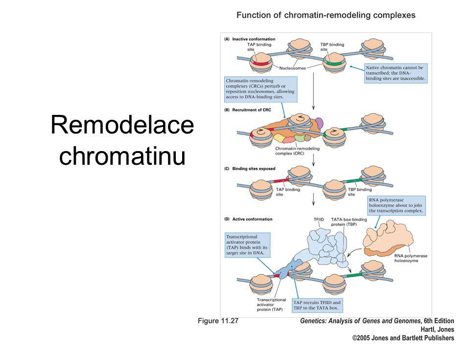 Remodelace chromatinu