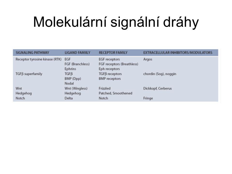 Molekulární signální dráhy