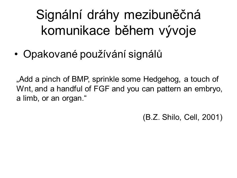 Signální dráhy mezibuněčná komunikace během vývoje