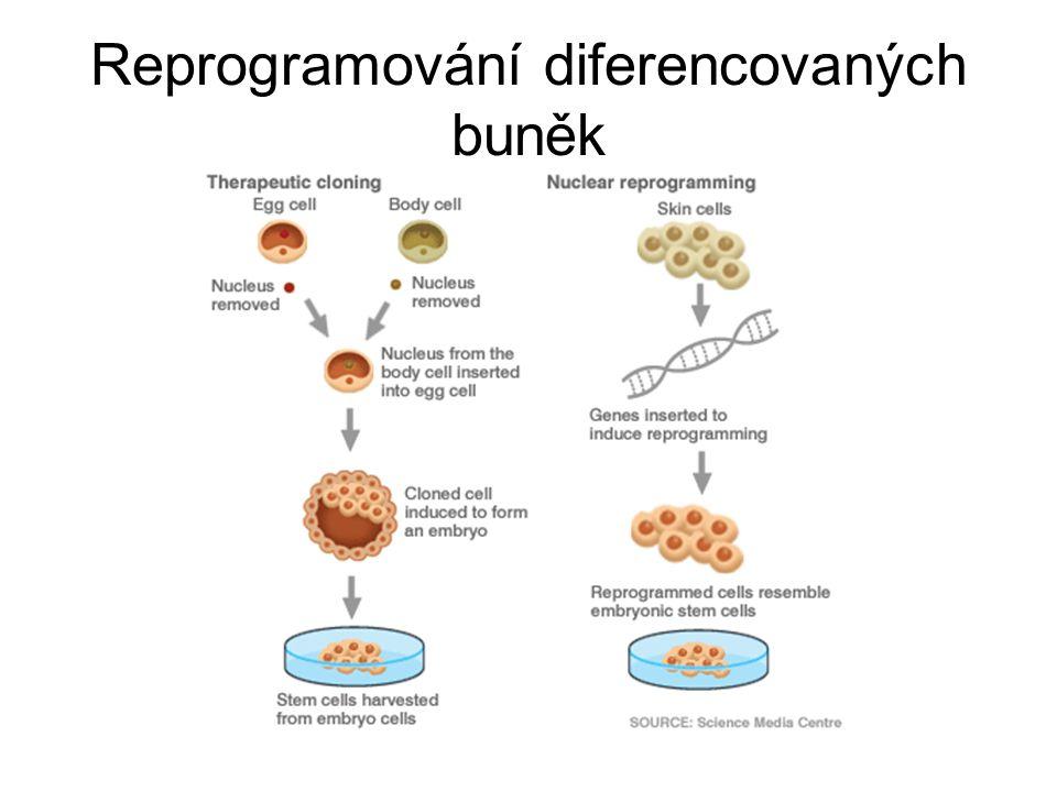 Reprogramování diferencovaných buněk