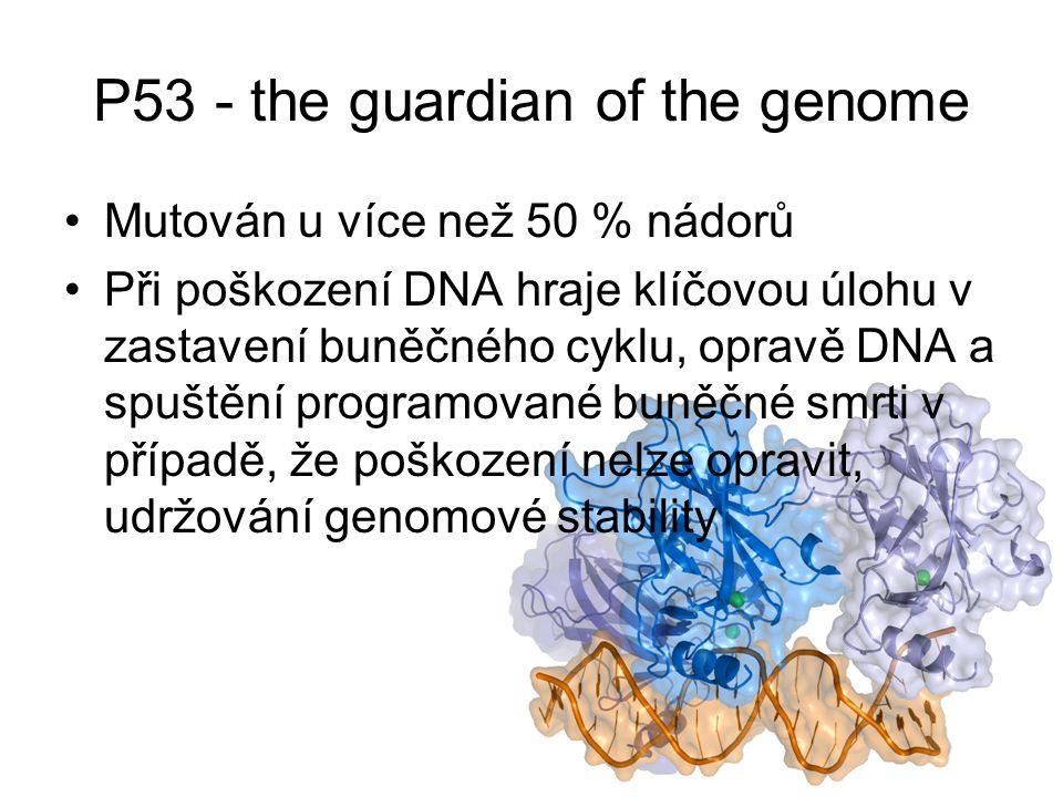 P53 - the guardian of the genome