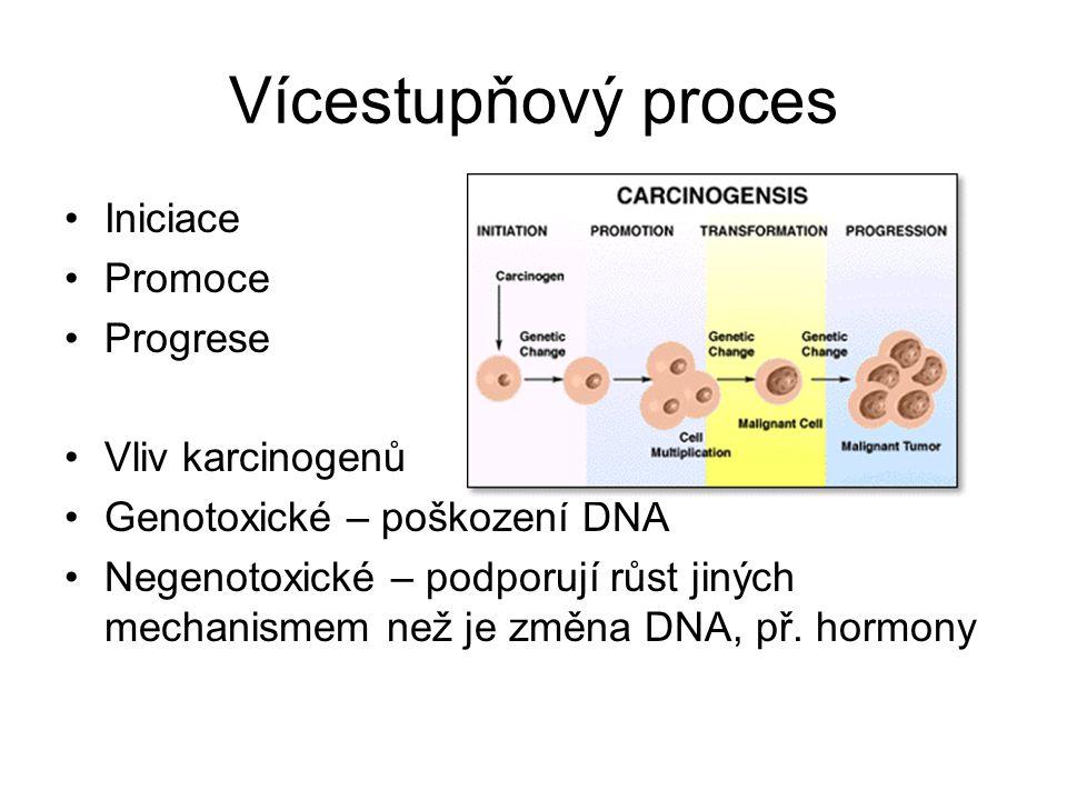 Vícestupňový proces Iniciace Promoce Progrese Vliv karcinogenů