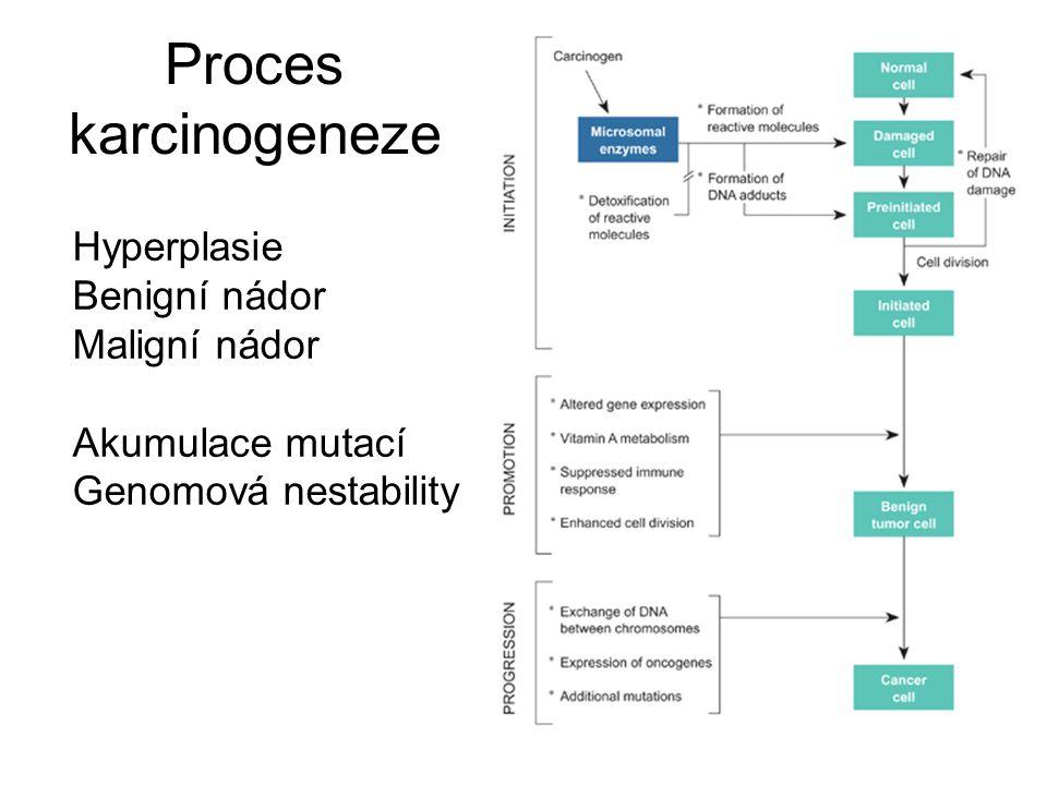 Proces karcinogeneze Hyperplasie Benigní nádor Maligní nádor