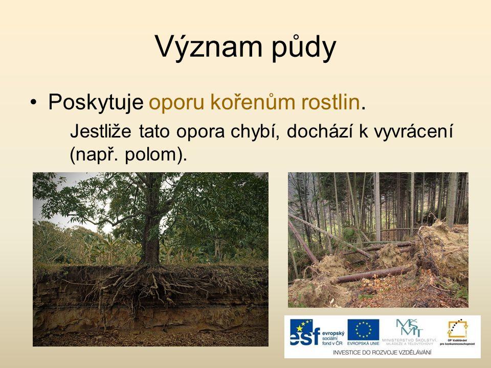 Význam půdy Poskytuje oporu kořenům rostlin.
