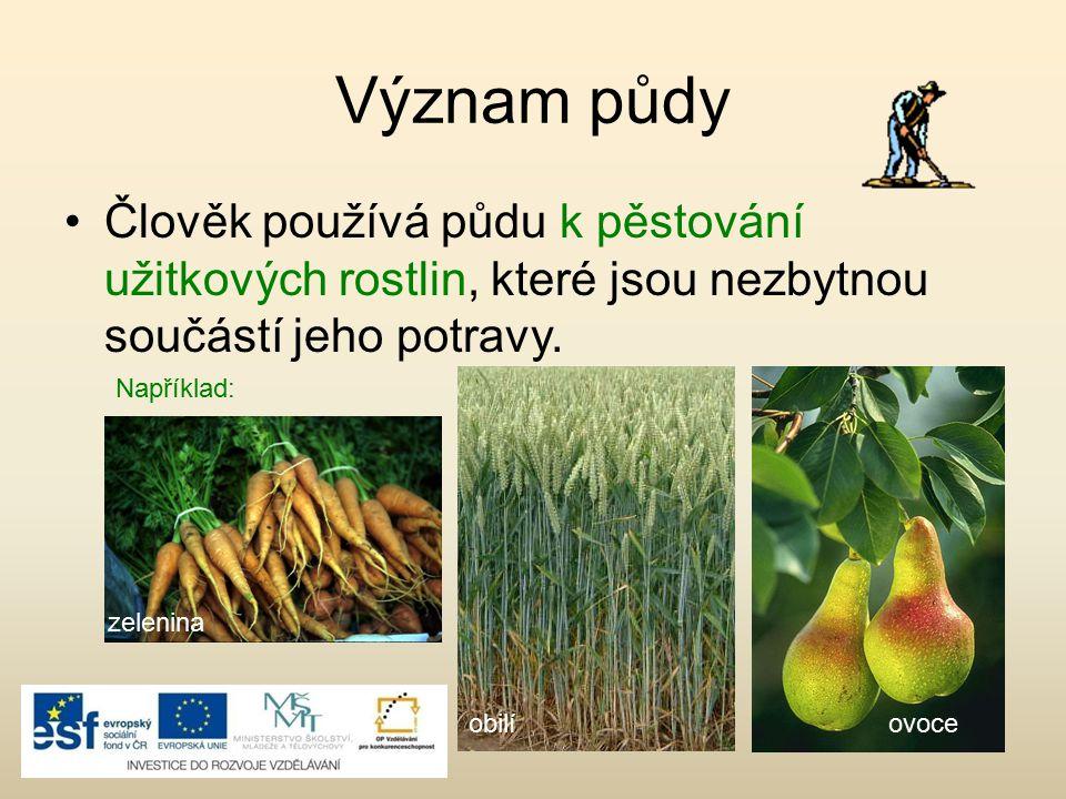 Význam půdy Člověk používá půdu k pěstování užitkových rostlin, které jsou nezbytnou součástí jeho potravy.