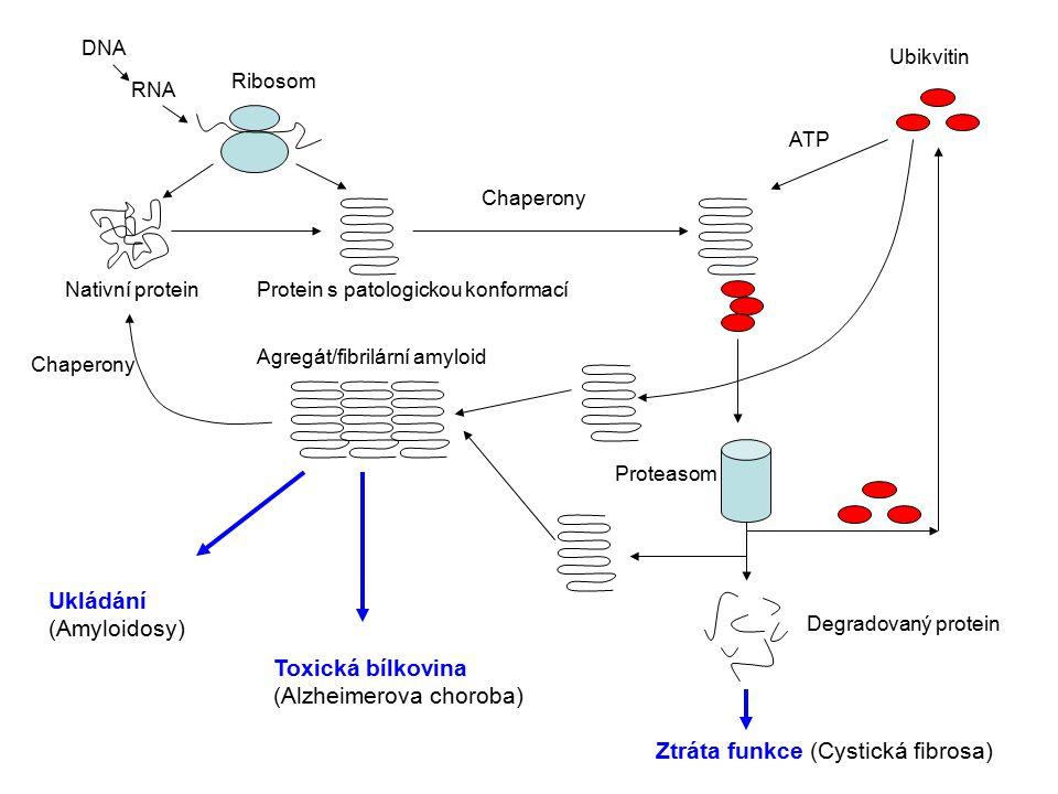 Ukládání (Amyloidosy)