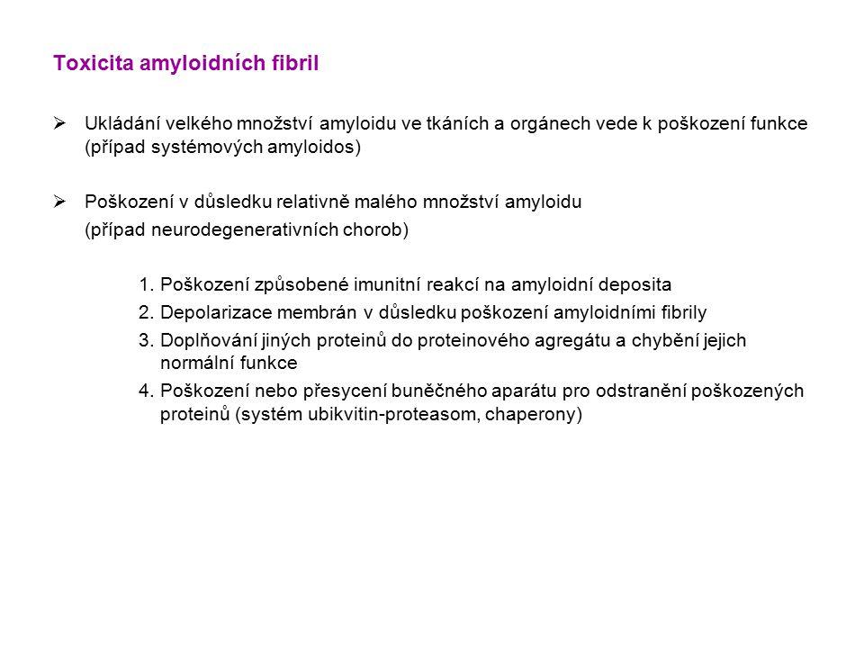 Toxicita amyloidních fibril