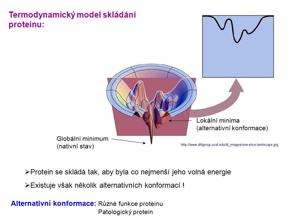 Termodynamický model skládání proteinu: