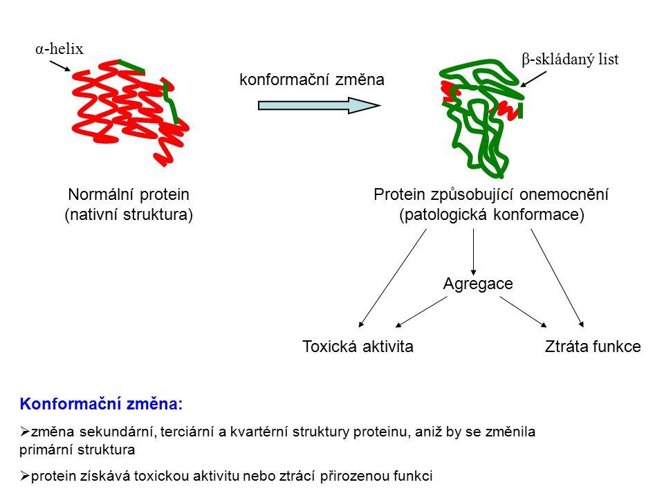 Normální protein (nativní struktura)