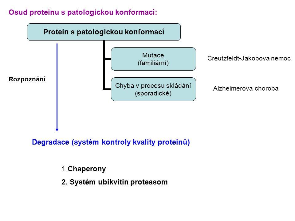 Osud proteinu s patologickou konformací: