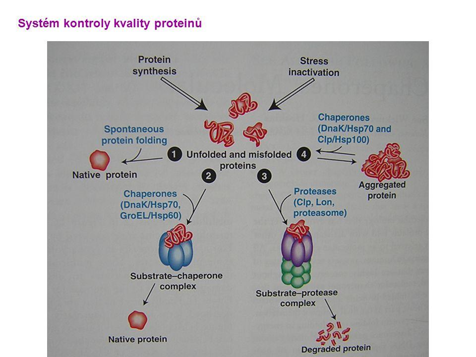 Systém kontroly kvality proteinů