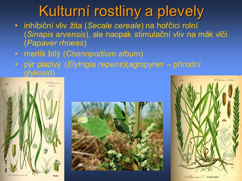 Kulturní rostliny a plevely
