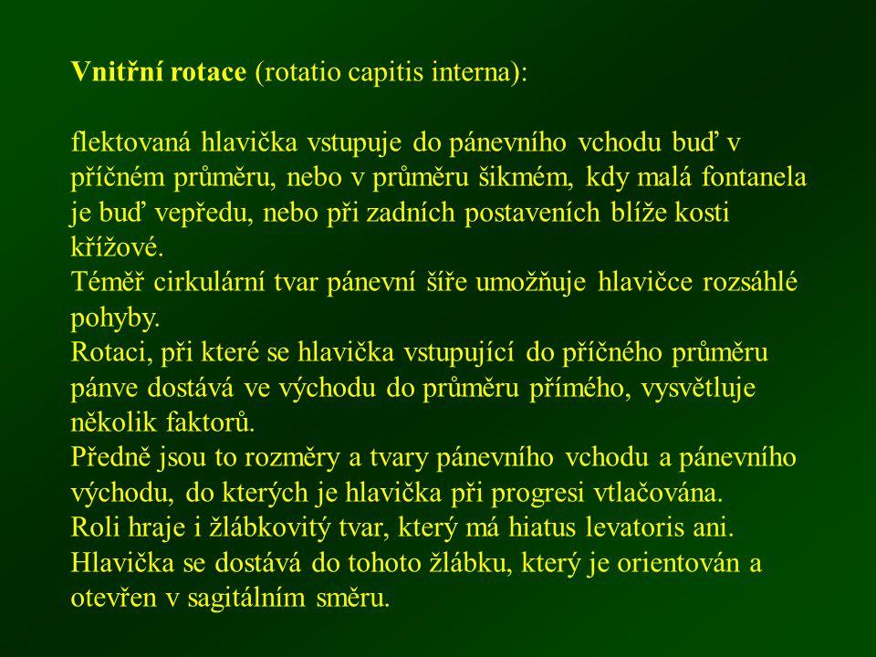 Vnitřní rotace (rotatio capitis interna):