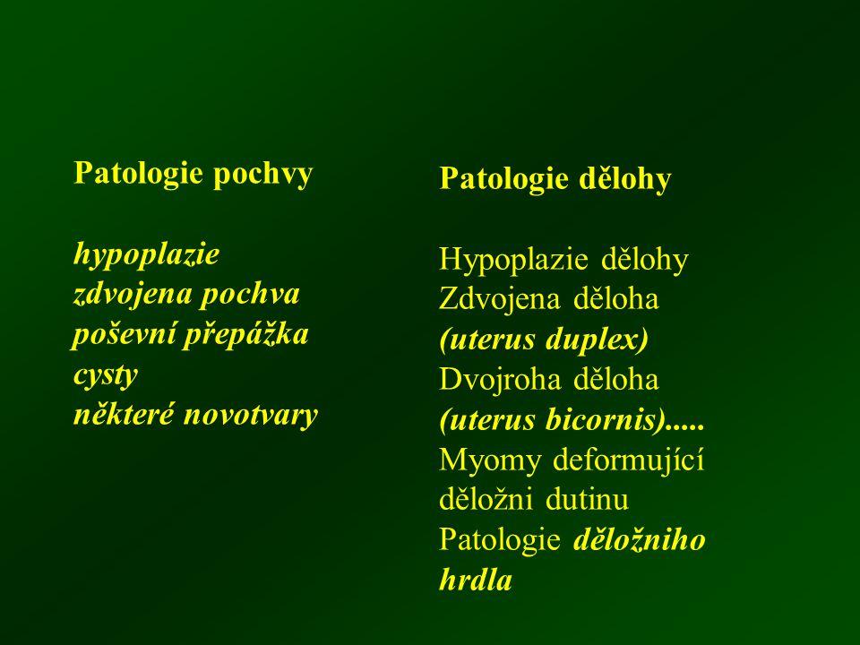 Patologie pochvy hypoplazie. zdvojena pochva. poševní přepážka. cysty. některé novotvary. Patologie dělohy.