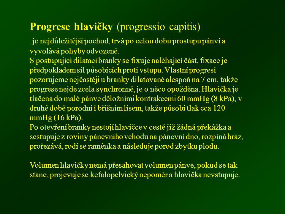 Progrese hlavičky (progressio capitis)