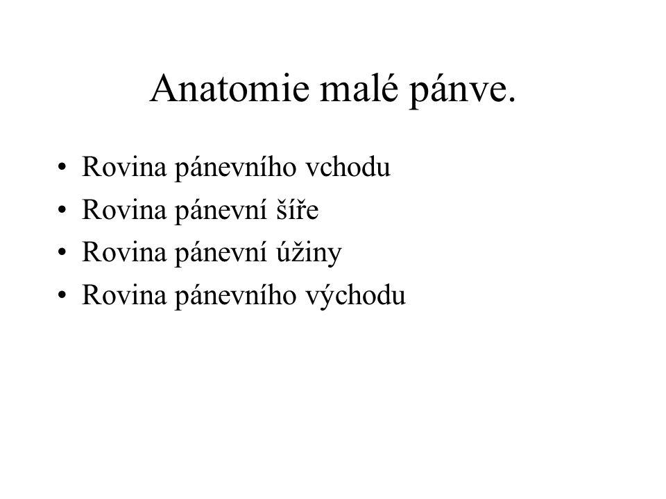 Anatomie malé pánve. Rovina pánevního vchodu Rovina pánevní šíře