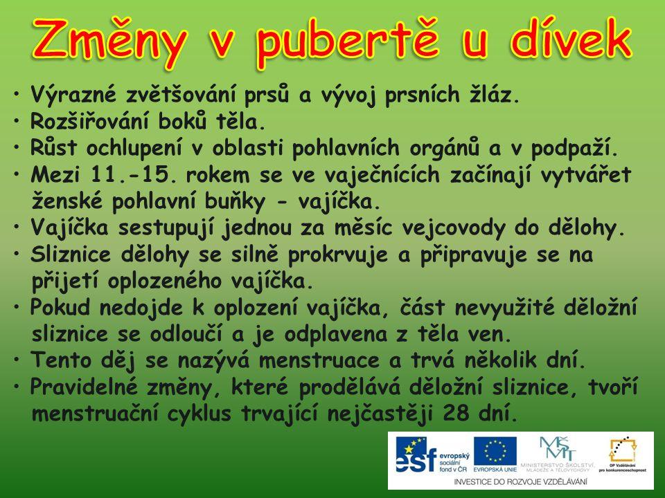 Změny v pubertě u dívek Výrazné zvětšování prsů a vývoj prsních žláz.