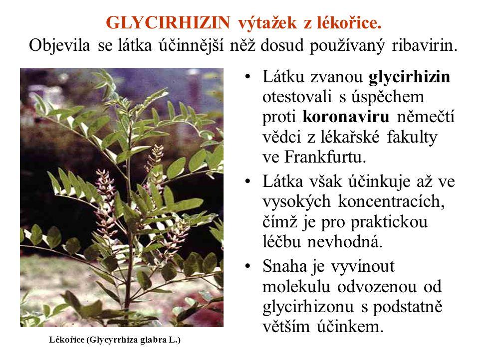 GLYCIRHIZIN výtažek z lékořice.