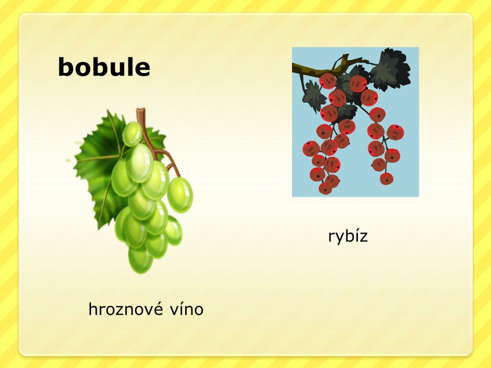 bobule rybíz hroznové víno