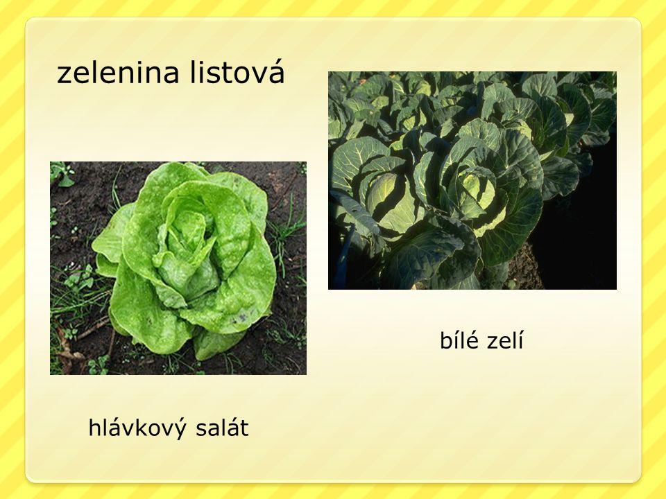 zelenina listová bílé zelí hlávkový salát