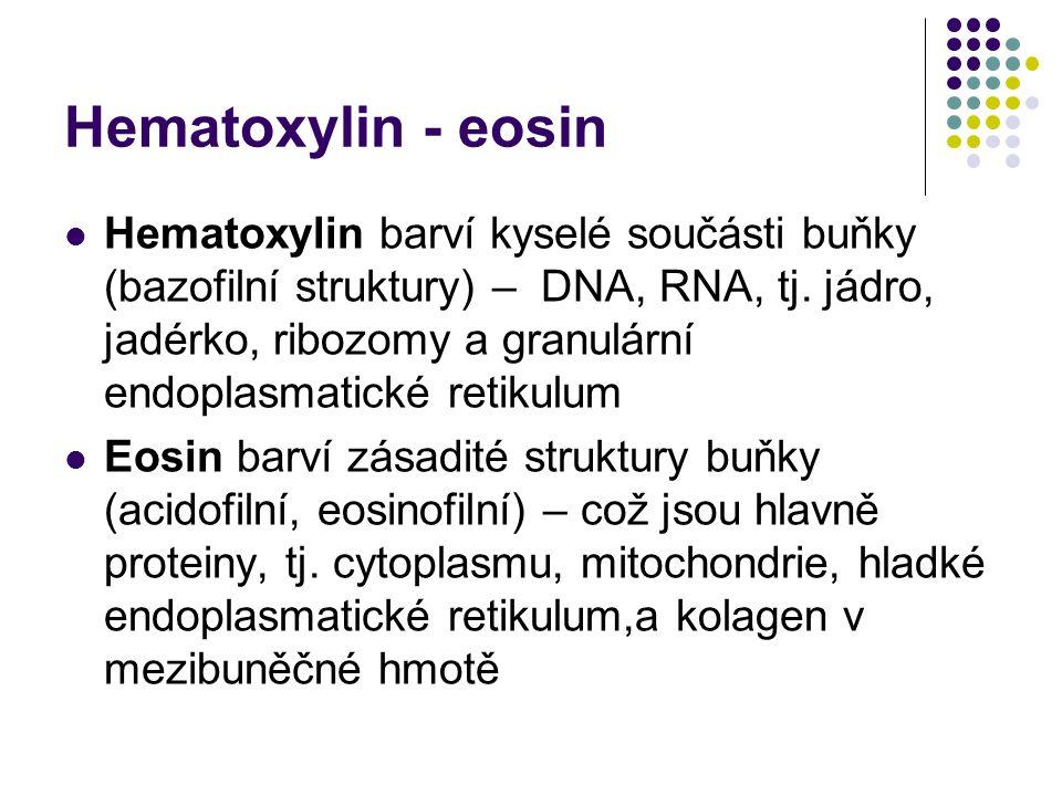 Hematoxylin - eosin