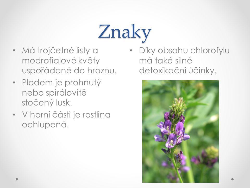 Znaky Má trojčetné listy a modrofialové květy uspořádané do hroznu.