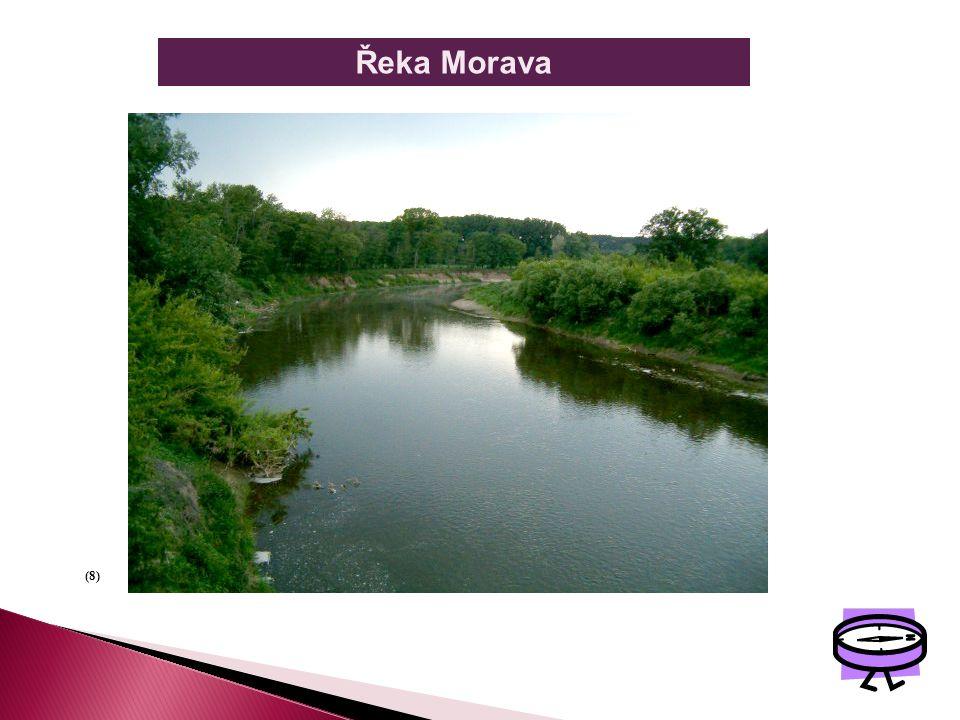 Řeka Morava (8)