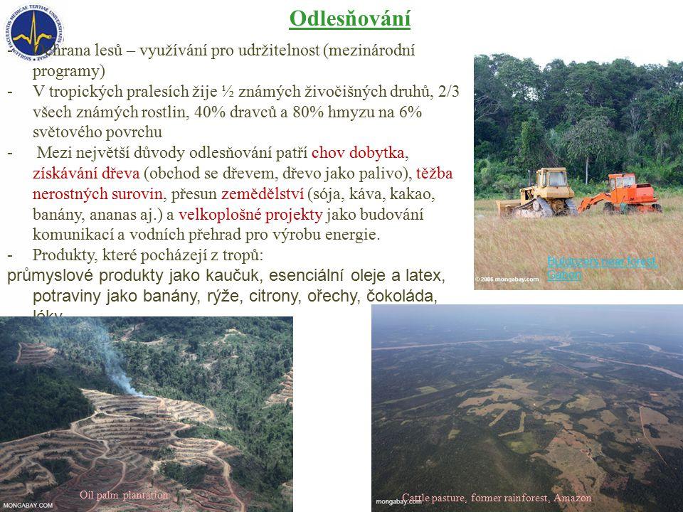 Odlesňování Ochrana lesů – využívání pro udržitelnost (mezinárodní programy)